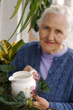 Elderly woman with plants. Spring portrait of elderly woman watering her flowers stock image