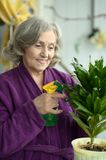 Elderly woman pours flowers Royalty Free Stock Photo
