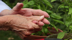 Elderly woman rubs her hands from arthritis pain stock video footage