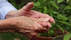 Elderly woman rubs her hands from arthritis pain