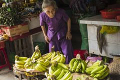 An elderly woman, selling fruit, in Hoi An`s ancient town. Hoi An, Vietnam. January 13, 2017: An elderly woman, at her banana stand, in the ancient town. Quang Stock Photography