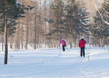 An elderly woman is skiing in the snowy winter woods or the Park, active lifestyle in retirement.  Stock Images