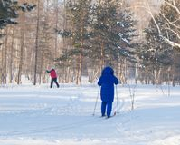 An elderly woman is skiing in the snowy winter woods or the Park, active lifestyle in retirement.  Stock Photo