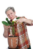 Elderly woman sprinkles flower Royalty Free Stock Image