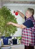The elderly woman sprinkles plant Stock Photos