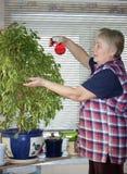 The elderly woman sprinkles plant Stock Photos