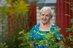 An elderly woman stands outdoor. Happy. Royalty Free Stock Photos