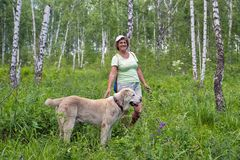 Elderly woman is walking with a dog in a birchwood in the summer. royalty free stock photo