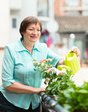 Elderly woman with watering-can taking care of plants Stock Photos
