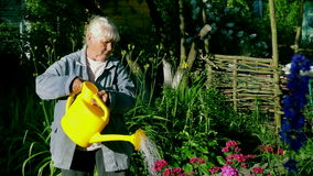 An elderly woman watering flowers in the garden of a country house stock footage