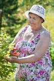 Elderly woman working with pruner in garden Stock Photos