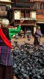 Elderly women feeding pigeons royalty free stock photography