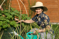 The elderly women in garden near blooming cucumber plant Royalty Free Stock Photography