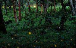 Eldflugor i en tropisk skog arkivbilder