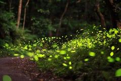 Eldflugor som omkring flyger i skogen Royaltyfri Bild