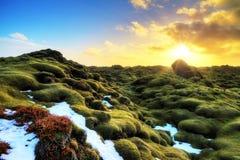 Eldhraun Island royaltyfri fotografi