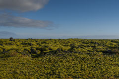 Eldhraun lava field landscape in Iceland. Eldhraun lava field moss cover on lava rock, beautiful volcanic landscape of Iceland in summer season Royalty Free Stock Photos