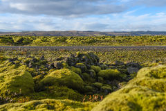 Eldhraun lava field landscape in Iceland. Eldhraun lava field moss cover on lava rock near the ring road and mountain view, beautiful volcanic landscape of Royalty Free Stock Image