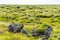 Eldhraun - Moss covered volcanic field, Iceland Royalty Free Stock Photos