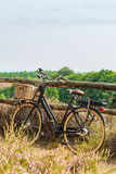Electric bicycle with basket in Dutch national park The Veluwe Stock Image