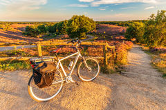Electric bicycle in Dutch national park The Veluwe. With blooming heathland, The Netherlands royalty free stock photo