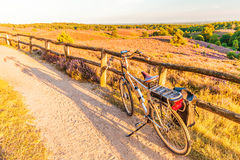Electric bicycle in Dutch national park The Veluwe. With blooming heathland, The Netherlands stock photo