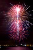 Electric Blooms Fireworks Stock Image