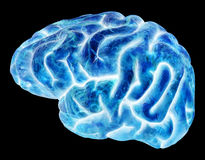 Electric Blue Human Brain Isolated Stock Photography