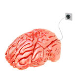 Electric brain. Electric red brain 3d model Stock Images
