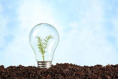 Electric bulb on earth with plant stock images