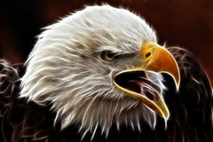 Electric Eagle royalty free stock images