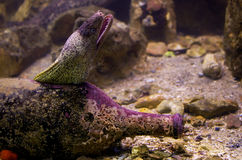 Electric eel. Moray inside a bottle on sea floor Stock Photos