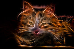 Electric effect Glowing Cat Royalty Free Stock Photo