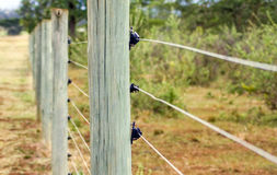 Electric Fence. Post fencing a wildlife sanctuary Royalty Free Stock Image