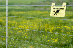 Electric Fence. An electric fence with a sign on it that says electric fence in front of a field of buttercups Royalty Free Stock Image