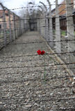 Electric fence in former Nazi concentration camp Auschwitz I, Stock Photography