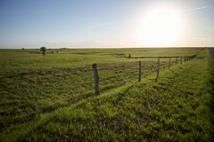 Electric fence in green pasture on sunny day. Electric fence surrounding green pasture on sunny day royalty free stock image