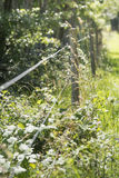 Electric fence and nature, Sweden Stock Photo