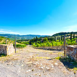 Electric Fence for Protect Vineyard. Hill of Tuscany with vineyard in the Chianti region. Olive trees on the Tuscany hills with vineyards in Italy. Electric Royalty Free Stock Photos