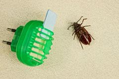 Electric insect protection device and brown beetle Stock Image