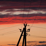 Electric line against colorful sky at sunset Royalty Free Stock Photos