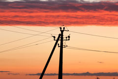 Electric line against colorful sky at sunset Royalty Free Stock Images