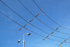 Electric lines necessary for the movement of trolley buses. Royalty Free Stock Images
