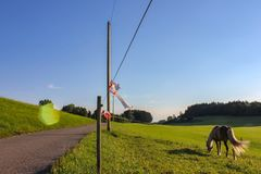 Electric pasture fence. In south germany bavaria allgau summer evening blue sky green grass Royalty Free Stock Photo
