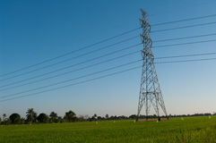 Electric pole. In rice farm field Royalty Free Stock Image