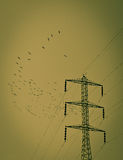Electric pole black birds. Royalty Free Stock Image