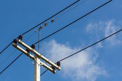 Electric pole. S are used for 22kv power lines from solar power plants to neighboring communities, blue sky with group the birds on the cable Royalty Free Stock Image