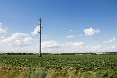 Electric pole and green field Stock Images