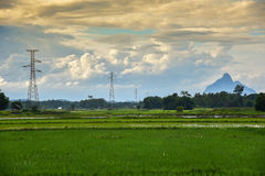 Electric pole and Rice field clouds Yellow. Landscape of electric pole and Rice field clouds Yellow Stock Photos
