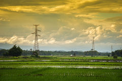 Electric pole and Rice field clouds Yellow Royalty Free Stock Photos